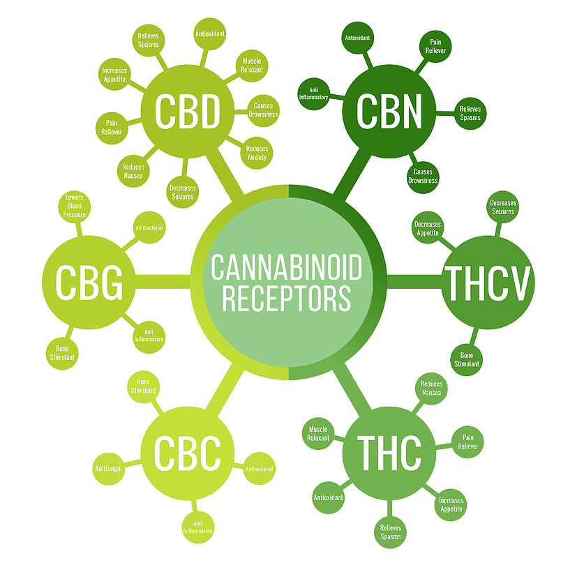Cannabinoid Graphic showing benefits of common cannabinoids